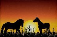 Aufnäher Pferd Motiv Nr. 23 Patch 9 x 6 cm