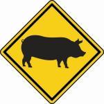 Aufkleber Vorsicht / Achtung Schwein