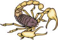 Aufkleber Skorpion Motiv Nr. 4