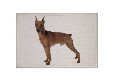 Aufnäher Patch Hund Pinscher 9 x 6 cm