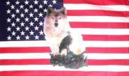 Fahne USA Wolf mit Adler 90 x 150 cm