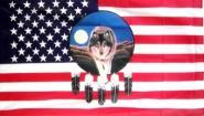 Fahne USA Traumfänger mit Wolf 90 x 150 cm